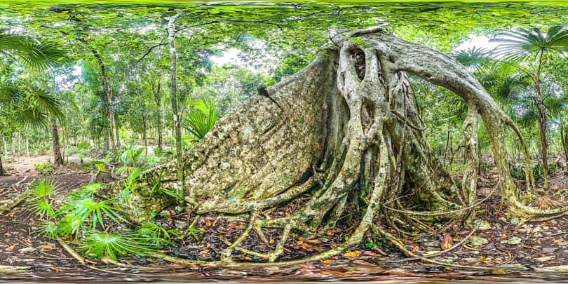 Selva en Quintana Roo