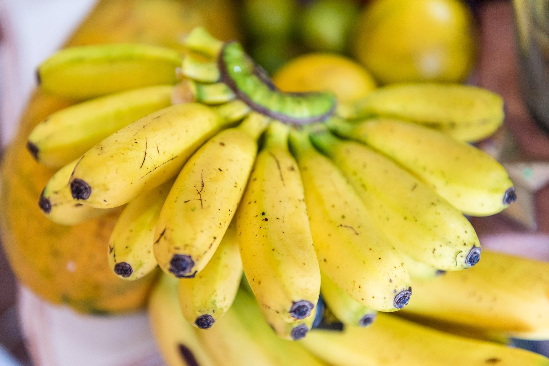 Wilde Früchte aus Tabasco