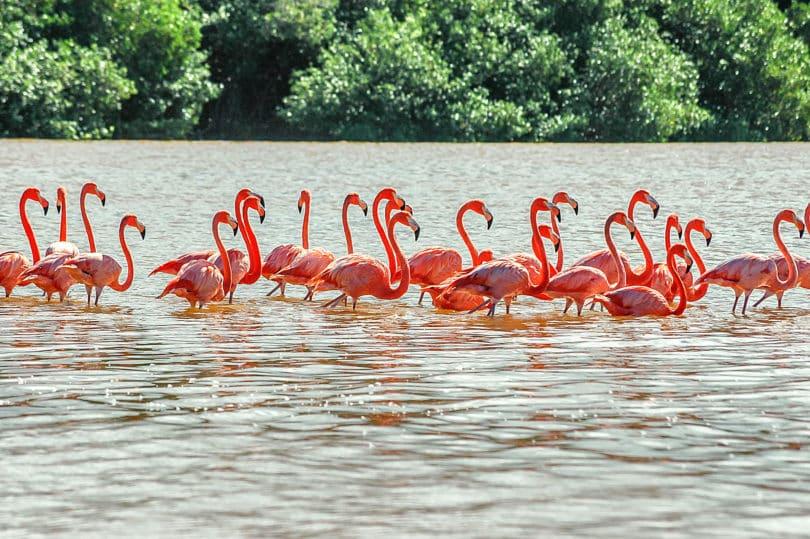 Flamingos in Celestún, Mexiko
