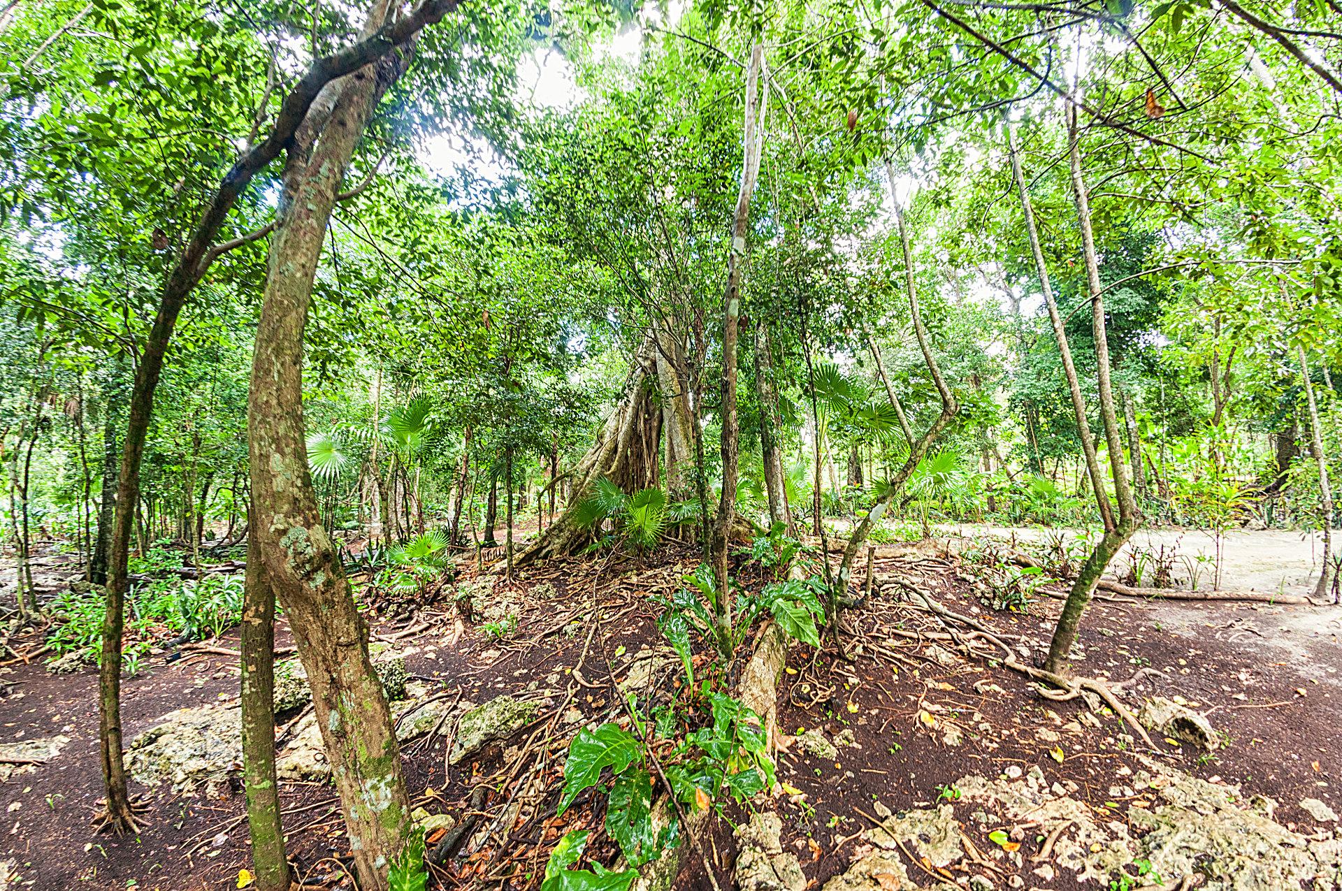 Cenote Boca del Puma