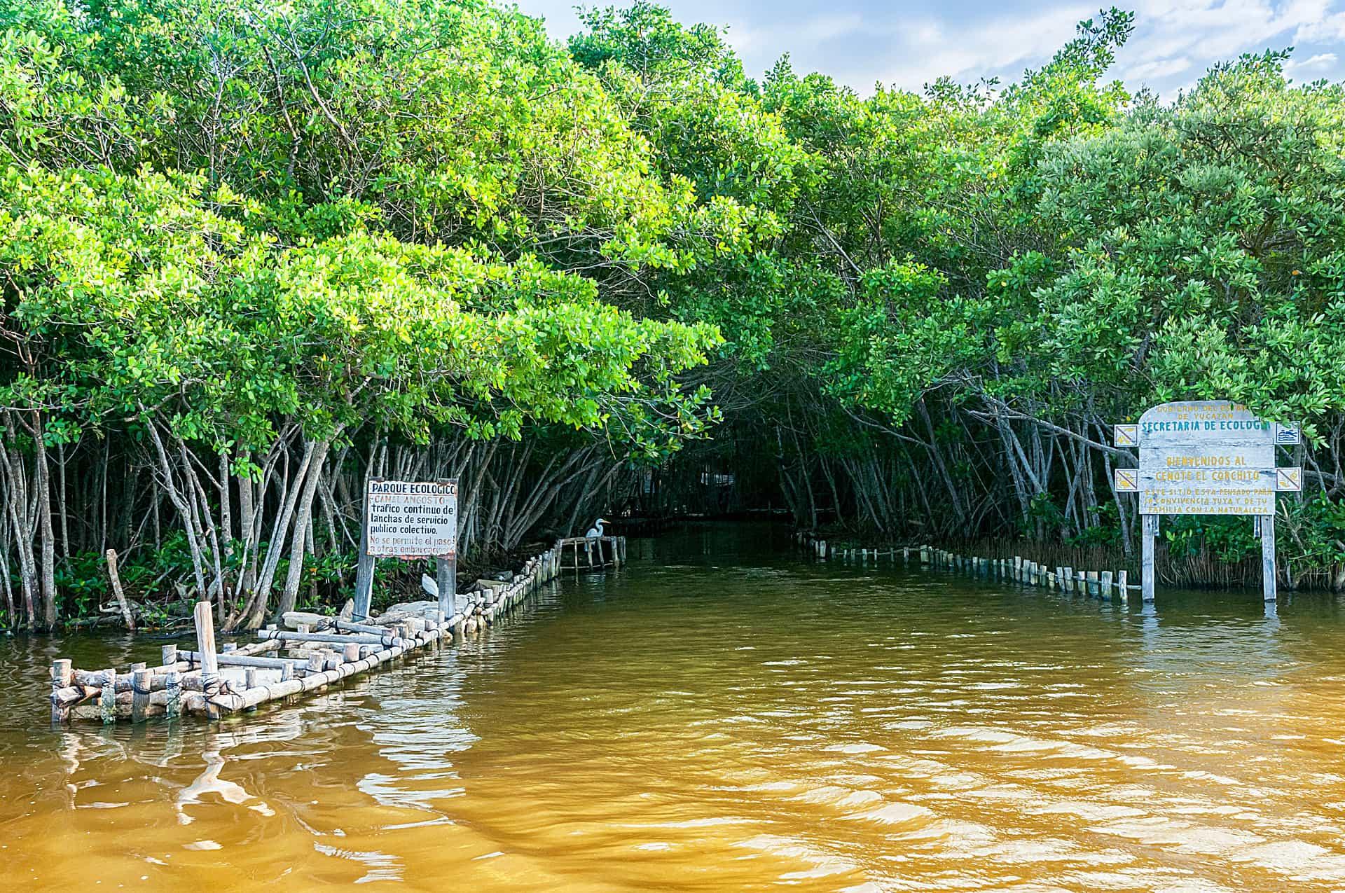 Cenote del Corchito