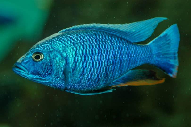 Fische von Mexiko