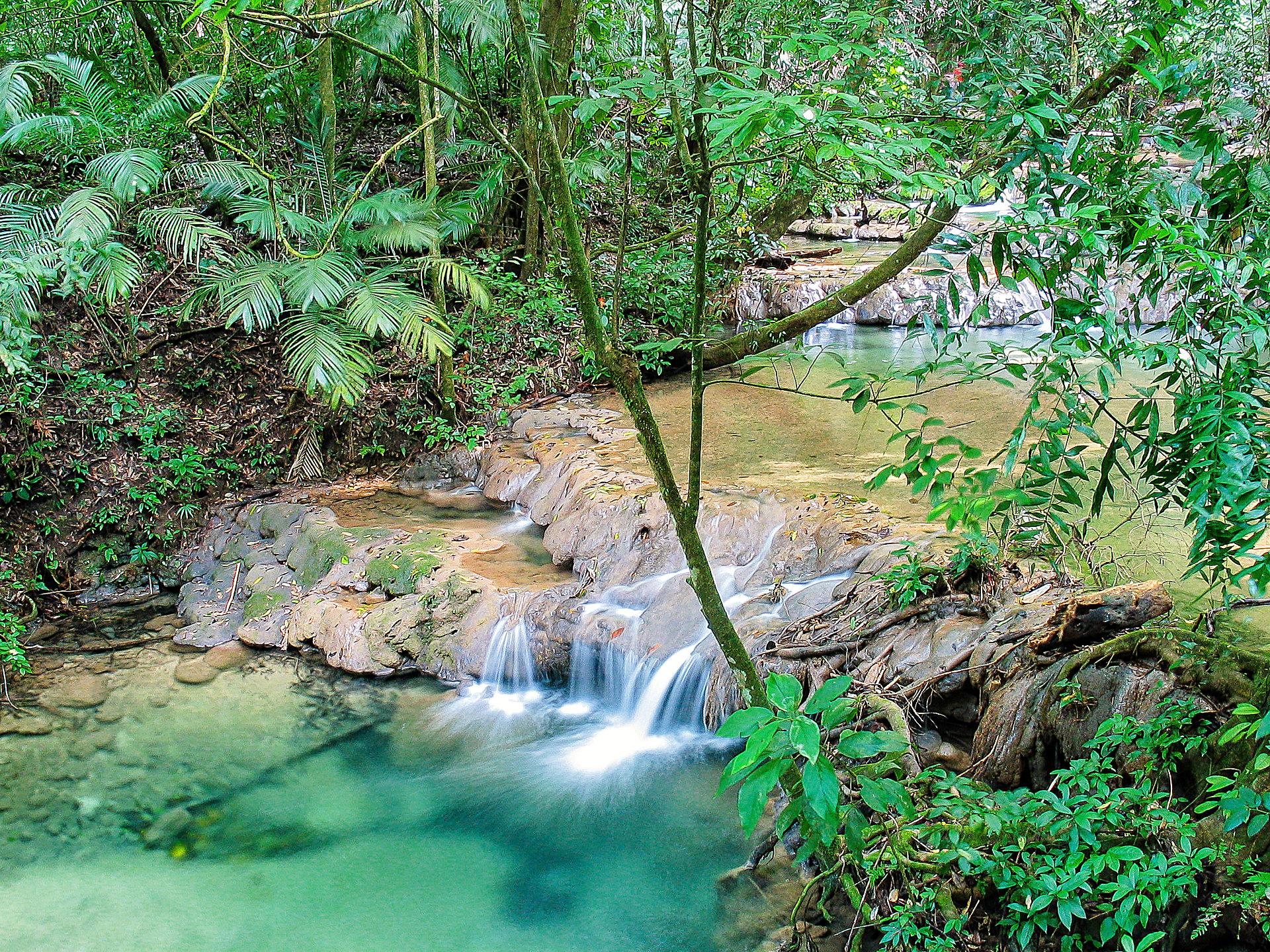 Wasserfall Im Regenwald Bei Palenque Mexiko