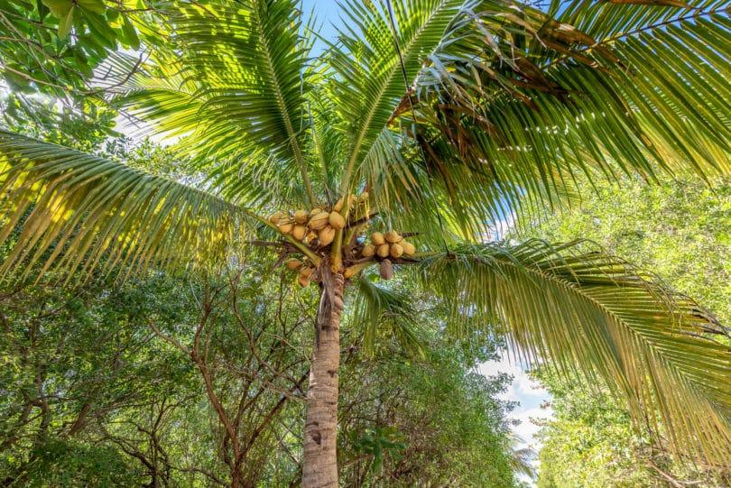 Palmen - Biodiversität von Mexiko