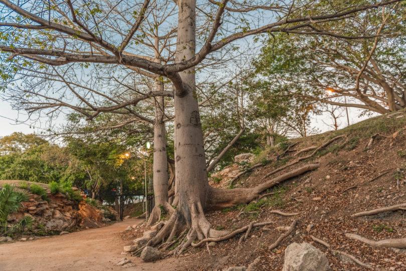 Parque Ecológico del Poniente in Mérida