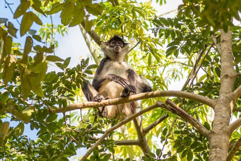 Über 535 verschiedene Säugetier-Arten leben in Mexiko - Biodiversität von Mexiko