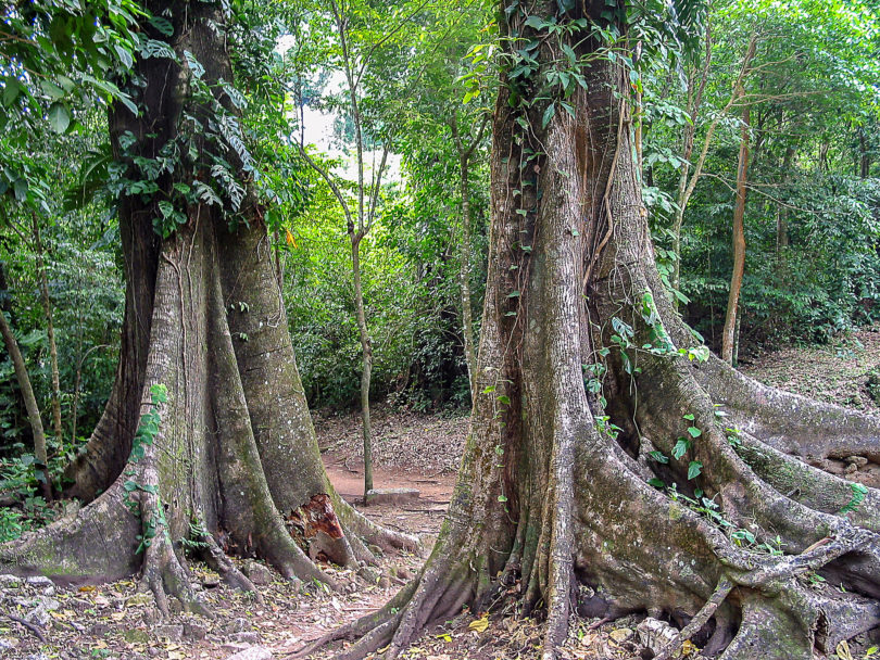 Regenwald bei Palenque