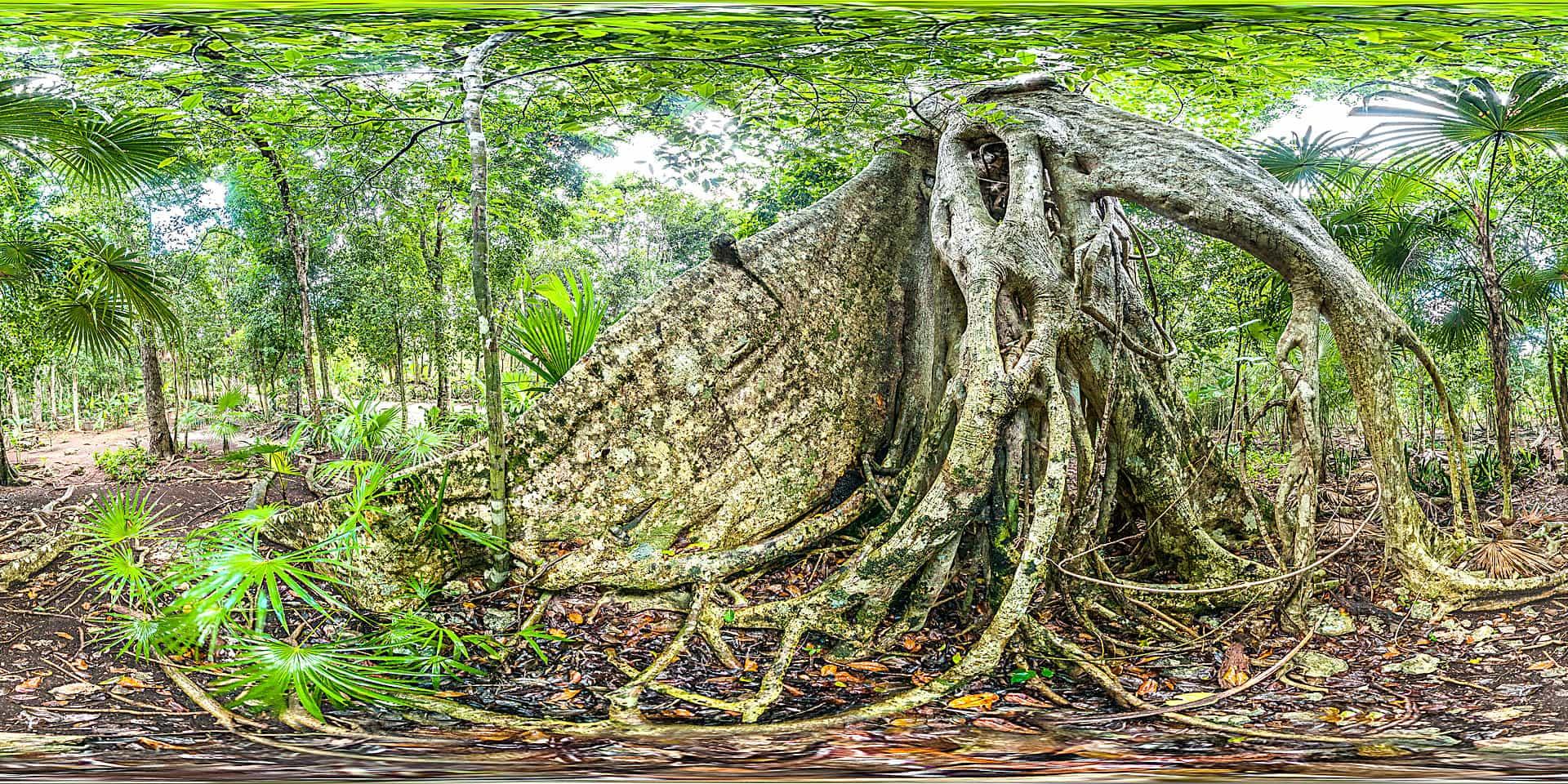 Regenwald in Quintana Roo