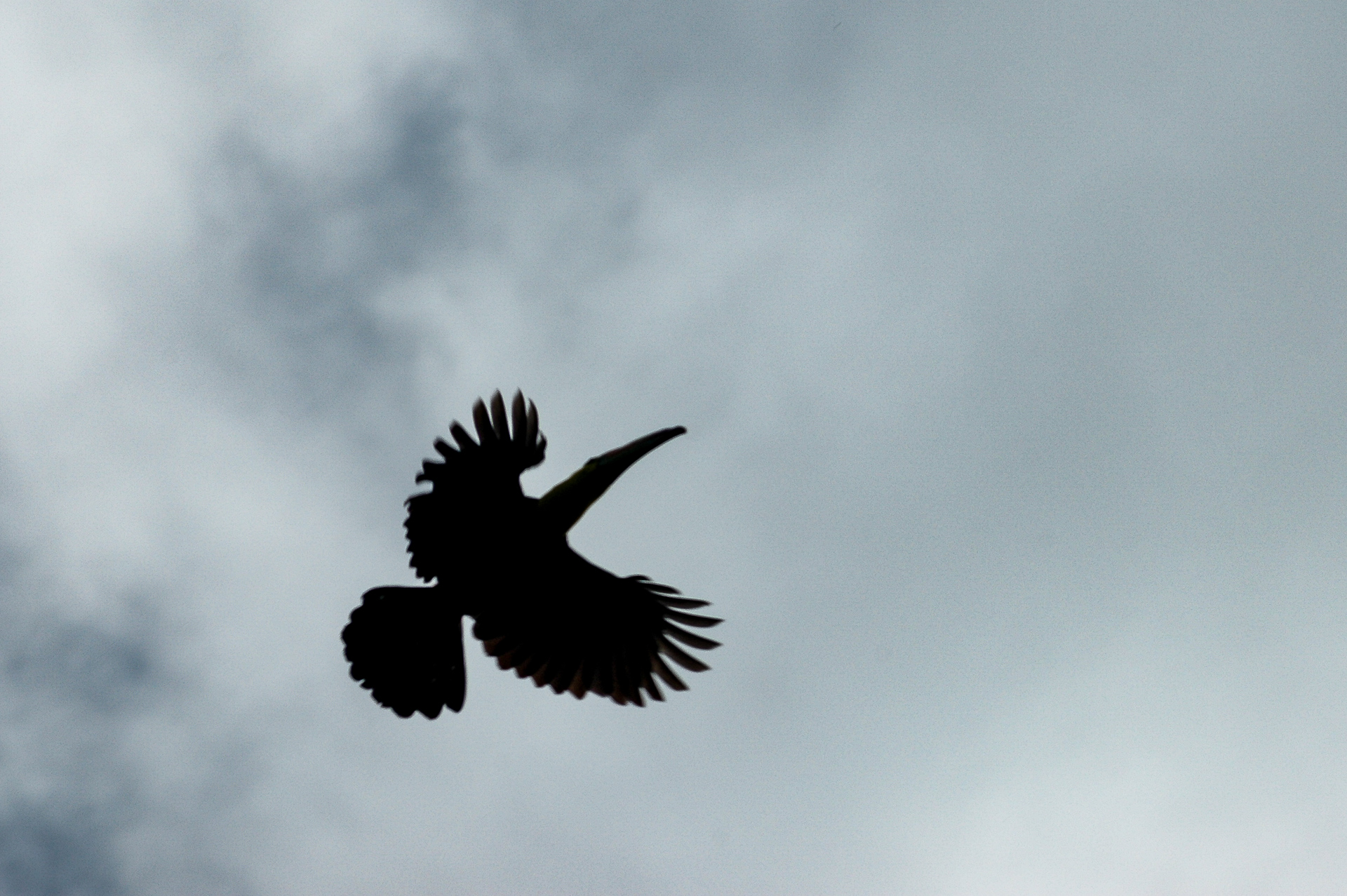Tukan-Flug