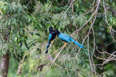 Vögel auf der Yucatán-Halbinsel