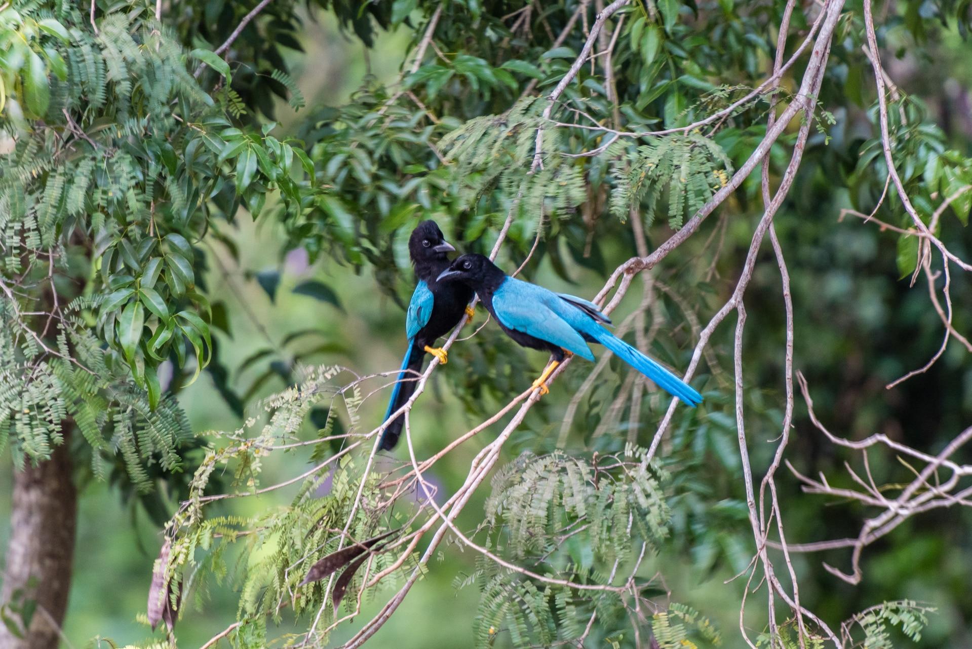 Vögel auf der Yucatán-Halbinsel - Biodiversität von Mexiko